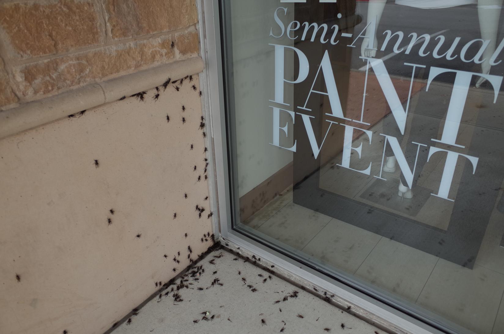 Bugs. Austin, Texas.